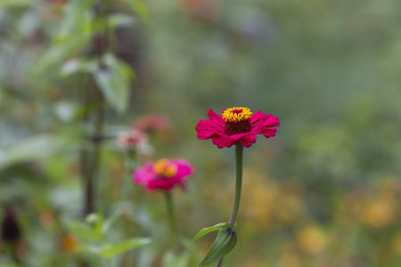 Beautiful pink and yellow flower great for background