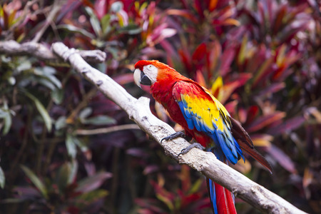 Macaw bird side profile while sitting on a branch in a jungle