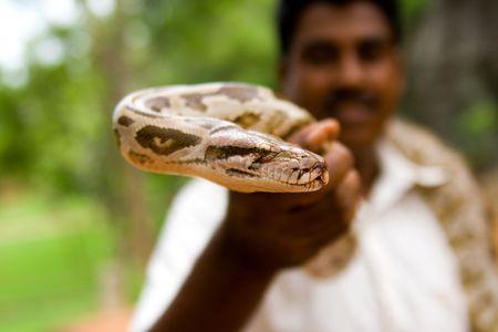 hypnotise: Snake charmer holding in hand a python Stock Photo