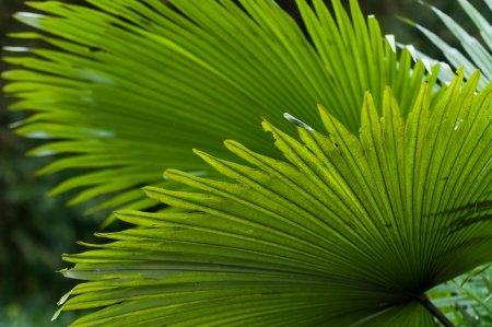 undergrowth: Thick green leaves growing in the rainforests of Southeast Asia.