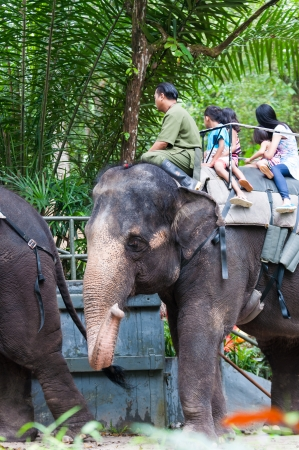 atop: A group of riders atop an Asian elephant (Elephas maximus) at the Singapore Zoo. Editorial