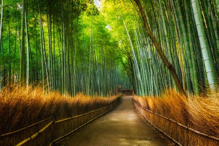 교토 아라시야마 대나무 숲, 일본.
