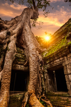 Enormous spung tree roots grow down around the doorways at Ta Prohm in Siem Reap, Cambodia.