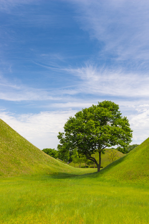 mounds: A single tree stands between two traditional burial mounds in Gyeongju, South Korea.