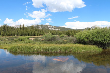 sierras: Tuolumne Meadows With Deer, Blue Sky, And Clouds