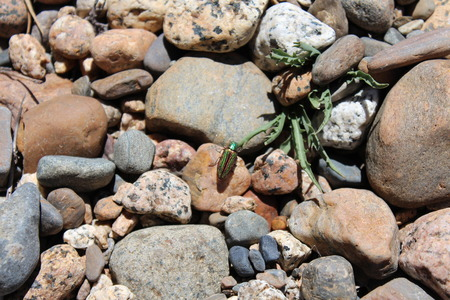 river rocks: Metallic Colored Beetle On River Rocks Stock Photo