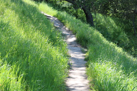 hiking trail: Grass Lined Hiking Trail