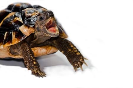 turtle hungry photo