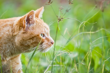 perceive: red cat on grass green