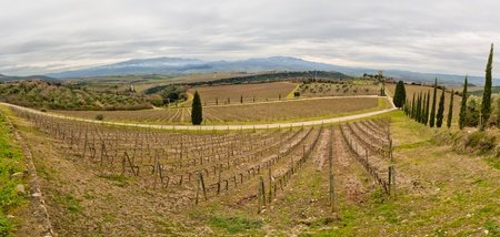 Tuscan vineyard in winter. Production of wine Brunello di Montalcino Stock Photo - 9456741