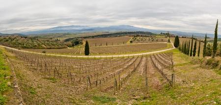 Tuscan vineyard in winter. Production of wine Brunello di Montalcino Stock Photo - 9456741