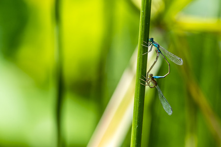 dropwing: Macro of a dragonfly, posing on a green stalk. Stock Photo