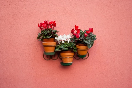 colorfull flowers on the wall photo