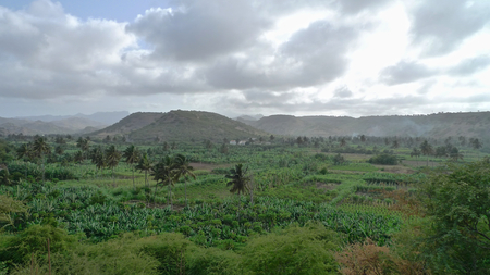 santiago cape verde: View over the plantings and palm trees, Santiago Island, Cape Verde