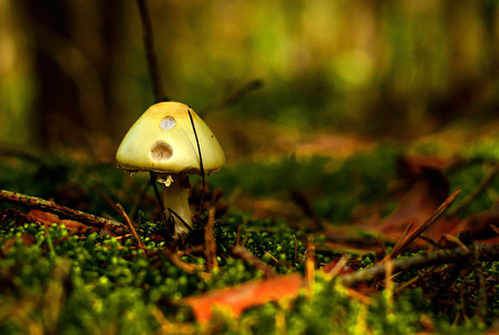 glade: Mushroom on a glade in the forest