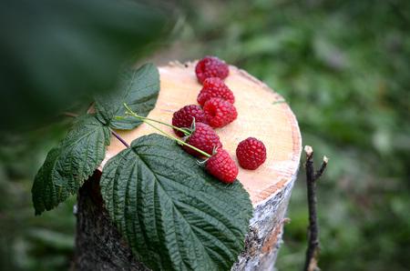 ripe: Raspberries ripe Stock Photo