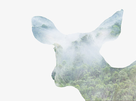 rain forest: Double exposure portrait of attractive  deer combined with photograph of rain forest