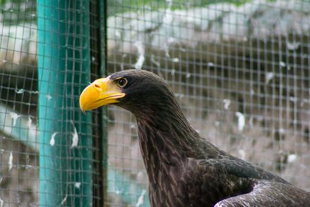 prey: bird of prey Stock Photo