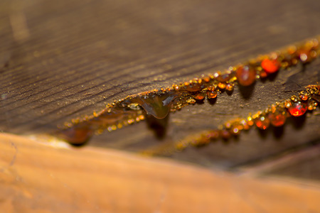 tree resin amber color orange fossil background
