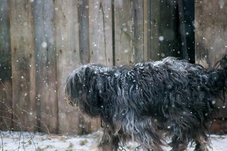 zoogdier: hondhuisdieren dieren hond mond dier zoogdier