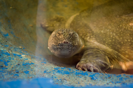 reptiles: pets animals reptiles reptile animal turtle isolated beauty