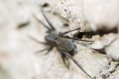 organism: spider pets animals arachnid organism background hair Stock Photo