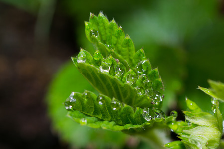 dew nature green grass color leaf blade freshness photo
