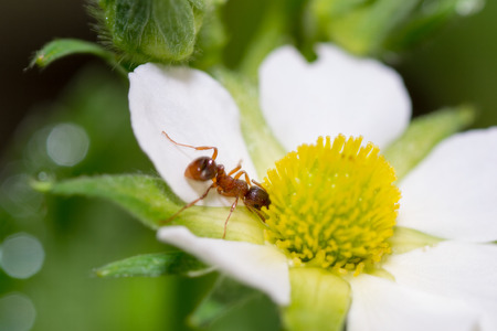 invertebrate: ant insect pets animals insects invertebrate small Stock Photo