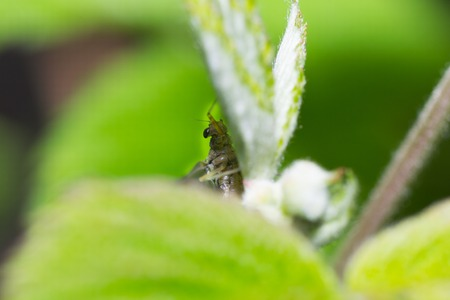 aciculum: fly insect on flower nature sit on the grass Stock Photo