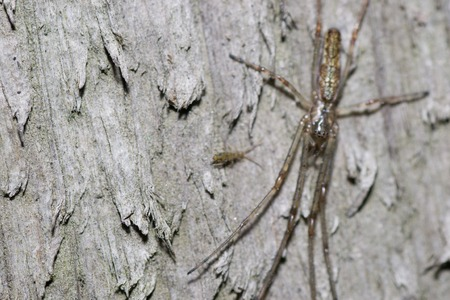 recluse: a spider in the web of nature
