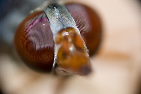 compound eyes: dragonfly eyes closeup on nature bright and colorful Stock Photo