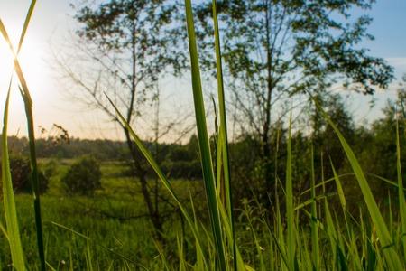 nature landscape: sun color nature landscape sunlight green outdoors