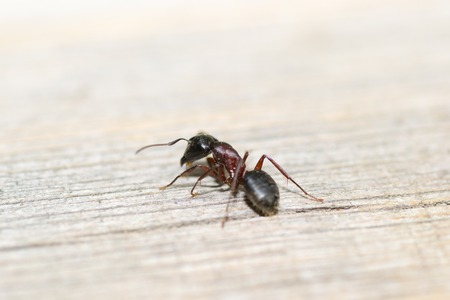 macro animals: animals ant insect pets insects macro leg color close-up Stock Photo