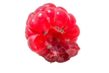 freshness: frutos de baya blanco comida frambuesa frescura aislado madura
