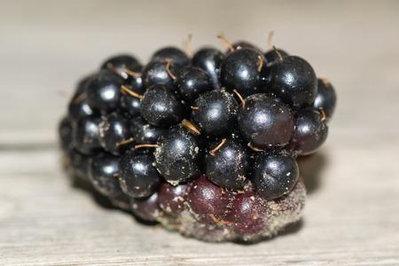 freshness: baya fruta blackberry bebida dulce frescura en Foto de archivo