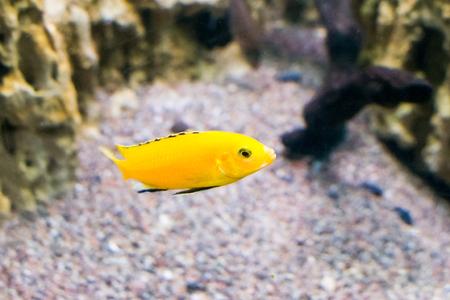 below: underwater below sea fish water animal reef climate