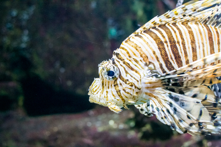 sharm: underwater below sea fish water animal reef climate