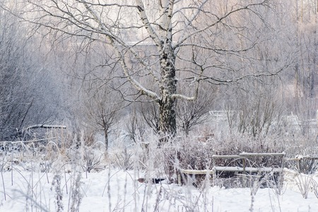 wintery day: winter birch forest wood white landscape path nature Stock Photo