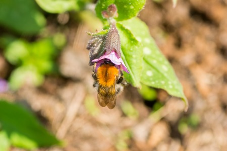 pollination: bee flower pollination animals nature macro insect Stock Photo