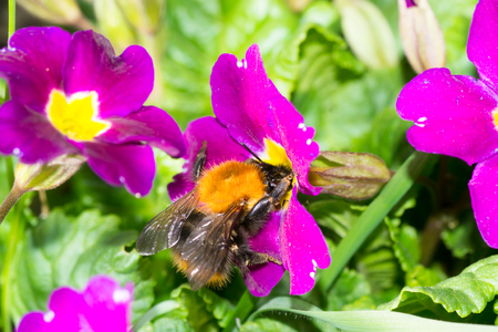 bee flower pollination animals nature macro insect Stock Photo