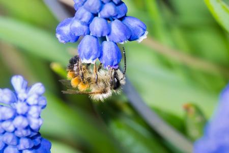 macro animals: bee flower pollination animals nature macro insect Stock Photo