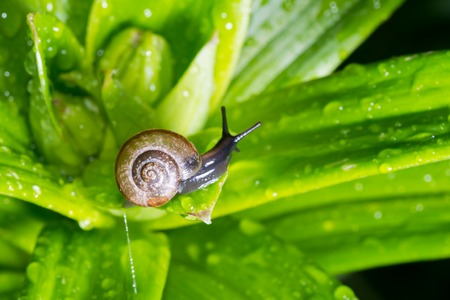 the snail in the background is crawling very slowly