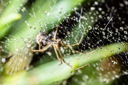 black textured background: spider in the web in the early morning in the dew Stock Photo
