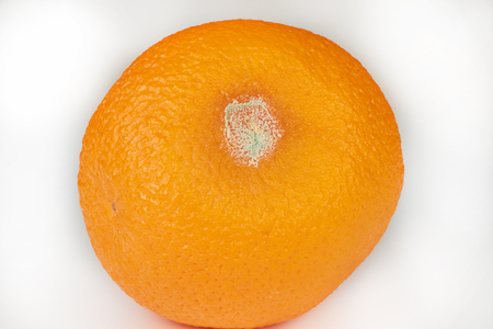 orange with mold and spoiled rotten bright delicious Stock Photo