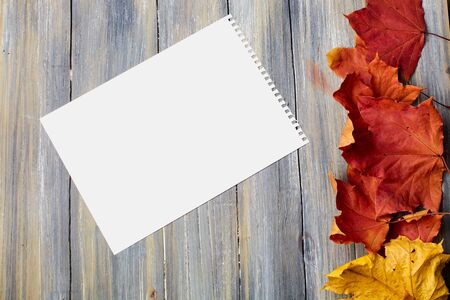 autumn leaves on a wooden background with a sheet of paper removed from the top yellow and red