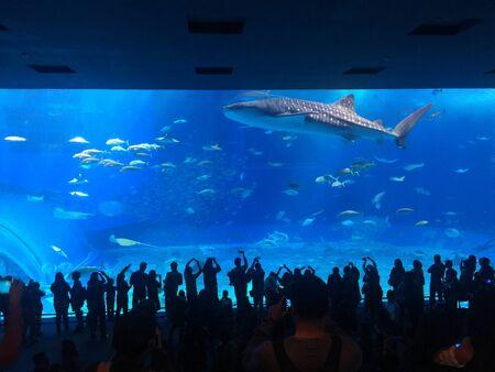 Whale shark Foto de archivo