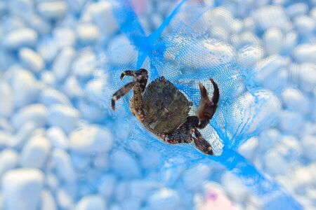 small black crab in a blue net. Close-up Stok Fotoğraf