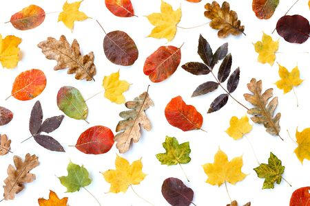 Set of beautiful colorful autumn leaves isolated on white.
