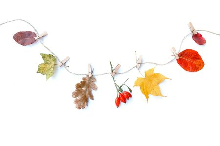 Autumn composition. Autumn flowers and leaves, rose hip. Flat lay, top view, copy space.