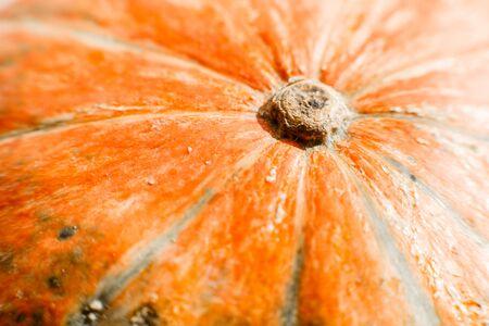 Close-up of a cute orange pumpkin